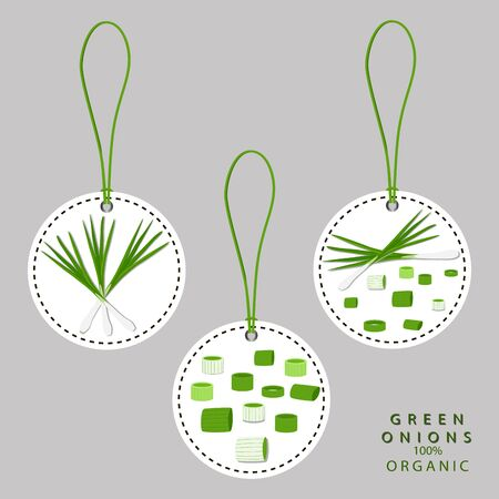 green onion: Vector illustration logo for whole ripe vegetable bitter onion, with green stem, cut sliced, close-up background.Onion drawing pattern consisting of tag label bow, bittersweet taste food.Eat fresh onions.
