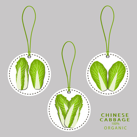Vector illustration logo for whole ripe vegetable chinese cabbage, with green rolls leaf, cut close-up background.Cabbage drawing pattern consisting of tag label bow, ripe sweet food.Eat chines cabbages.
