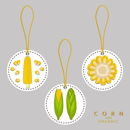 Vector illustration logo for whole ripe vegetable yellow corn, with green stem leaf, cut sliced.Corn drawing pattern consisting of tag label bow, peel grain, pip ripe sweet maize.Eat fresh corns health. Illustration