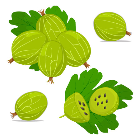Vector illustration logo for whole ripe fruit gooseberry with green stem leaf, cut half, background.Gooseberry drawing consisting of tag label, natural sweet food.Eat fresh organic fruits gooseberries.