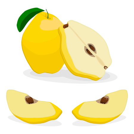Vector illustration logo for whole ripe yellow fruit quince, green stem leaf, cut half, sliced pear, background.Pattern consisting of natural sweet food.Eat fresh tropical fruits quinces to health.
