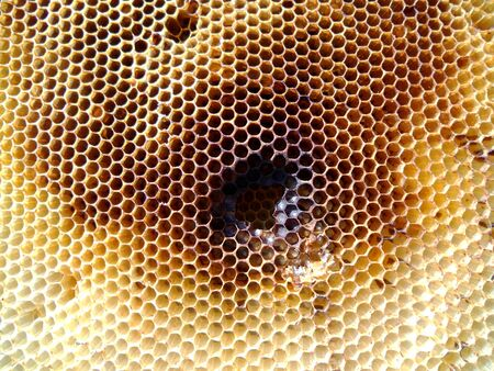 beeswax candle: The photo shows beehive honey nectar hive swarm winged bee honeycomb wax private beverage beekeeper beeswax.Beehive honey for beeswaxes honeycombs beekeepers.Honeycomb consists from apiculture beehives. Stock Photo