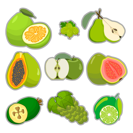 persimmon: Abstract vector illustration logo for whole ripe fruit pomelo lime pearl green stem cut sliced. Illustration