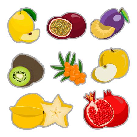 Abstract vector illustration logo for whole ripe fruit kiwi plum pomegranate cut sliced. Illustration