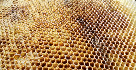 The photo shows beehive honey nectar hive swarm winged bee honeycomb wax private apiary beekeeper beeswax. Stock Photo