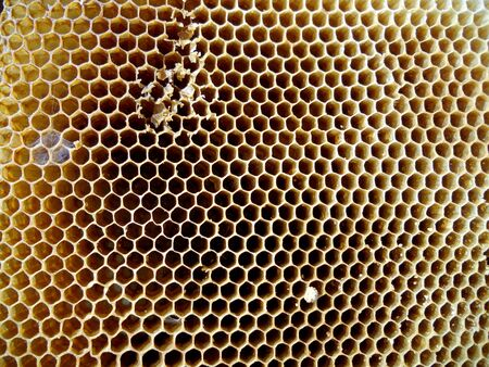 beeswax candle: The photo shows beehive honey nectar hive swarm winged bee honeycomb wax private apiary beekeeper beeswax. Stock Photo