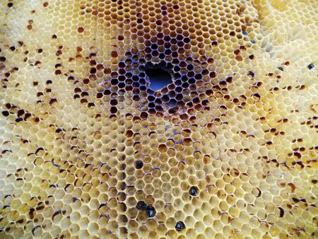 apiculture: The photo shows beehive honey nectar hive swarm winged bee honeycomb wax private apiary beekeeper beeswax. Stock Photo