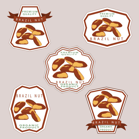 Abstract illustration whole ripe brown brazil nut, sliced shell, product background.