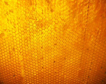 The abstract photo for theme yellow honey