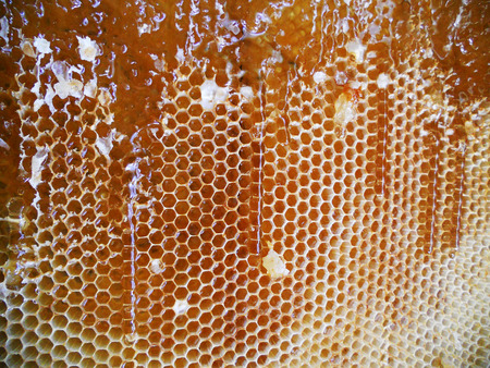 beeswax candle: The abstract photo for theme natural honey Stock Photo