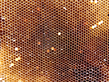 Background hexagon texture, wax honeycomb from a bee hive filled with golden honey. Honeycomb macro photography consisting of beeswax, yellow sweet honeys from beehive. Honey nectar of bees honeycombs