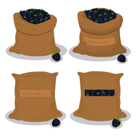 Vector illustration for bags filled with black berry blackberry, storage in sacks. Blackberry pattern consisting of ripe food, raw product on open Sack. Tasty blackberry from eco sack,full baggy bag