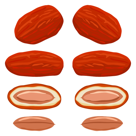 Illustration on theme big colored set different types of date fruit for healthy life. Date fruit pattern consisting of collection accessory at healthy lifestyle. Fruit dates is symbol healthy meal.