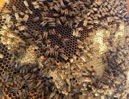 Abstract hexagon structure is honeycomb from bee hive filled with golden honey. Honeycomb summer photography consisting of gooey honey from bee village. Honey rural of bees honeycombs to countryside. 写真素材