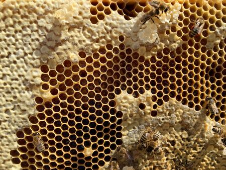 Abstract hexagon structure is honeycomb from bee hive filled with golden honey. Honeycomb summer photography consisting of gooey honey from bee village. Honey rural of bees honeycombs to countryside. Stockfoto