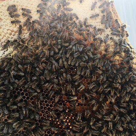 La struttura esagonale astratta è a nido d'ape dall'alveare pieno di miele dorato. Fotografia estiva a nido d'ape composta da miele appiccicoso dal villaggio delle api. Miele rurale di favi di api di campagna.