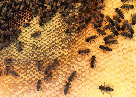 Abstract hexagon structure is honeycomb from bee hive filled with golden honey. Honeycomb summer composition consisting of gooey honey from bee village. Honey rural of bees honeycombs to countryside. Imagens - 138090782