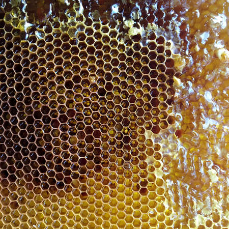 Drop of bee honey drip from hexagonal honeycombs filled with golden nectar. Honeycombs summer composition consisting of drop natural honey, drip on wax frame bee. Drop of bee honey drip in honeycombs. Zdjęcie Seryjne