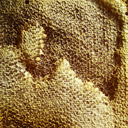 Abstract hexagon structure is honeycomb from bee hive filled with golden honey. Honeycomb summer composition consisting of gooey honey from bee village. Honey rural of bees honeycombs to countryside.