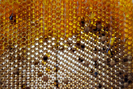 Drop of bee honey drip from hexagonal honeycombs filled with golden nectar. Honeycombs summer composition consisting of drop natural honey, drip on wax frame bee. Drop of bee honey drip in honeycombs.