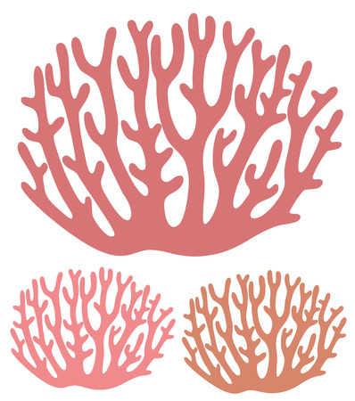 coral: Coral Illustration
