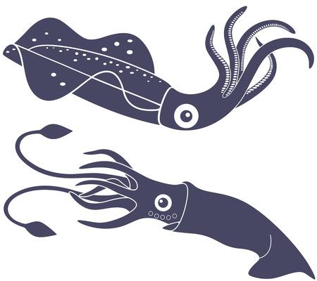 cuttlefish: Squid Illustration