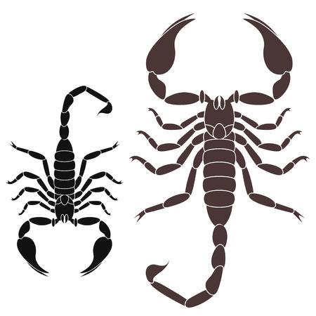 poisonous organism: Scorpion Illustration