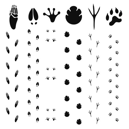 vogelspuren: Paw Print Illustration