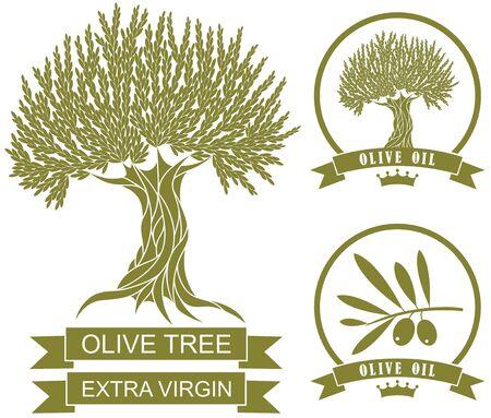 aceite de oliva virgen extra: Olivo
