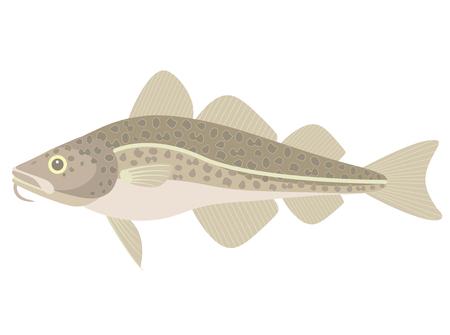 Cod Иллюстрация