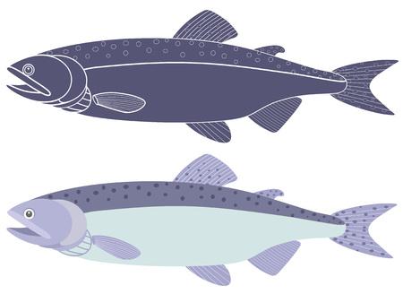 humpback: Humpback salmon Illustration