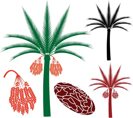 dates fruit: Palm tree