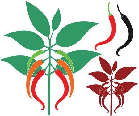bush pepper: Chili Pepper