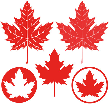 red maples: Maple leaf