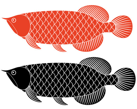 arowana: Dragon fish Illustration