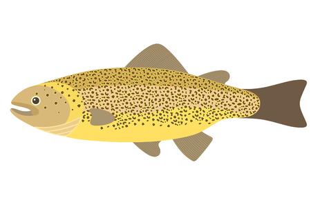 brown trout: River Trout