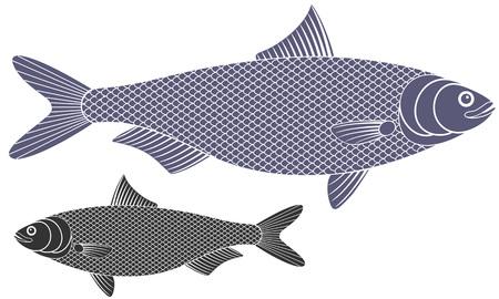 herring: Herring illustration