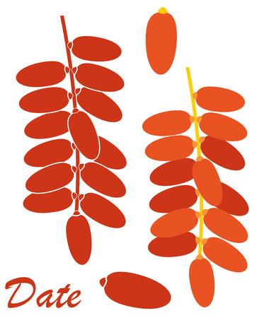 date fruit: Date. Fruit illustration  Illustration