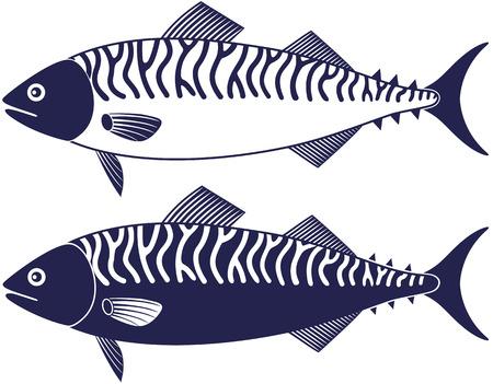 mackerel: Mackerel Illustration