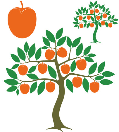 persimmon tree: Persimmon tree Illustration