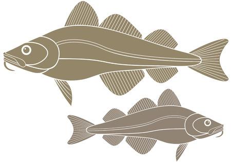 Cod illustration  向量圖像