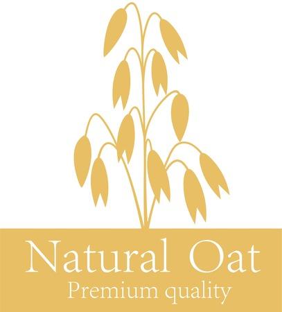 oat field: Oat illustration