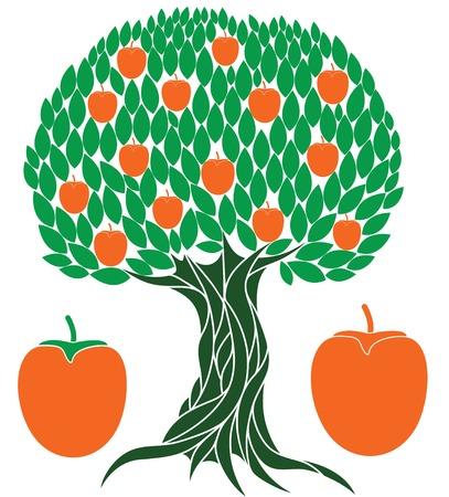 vegetarianism: Persimmon tree illustration  Illustration