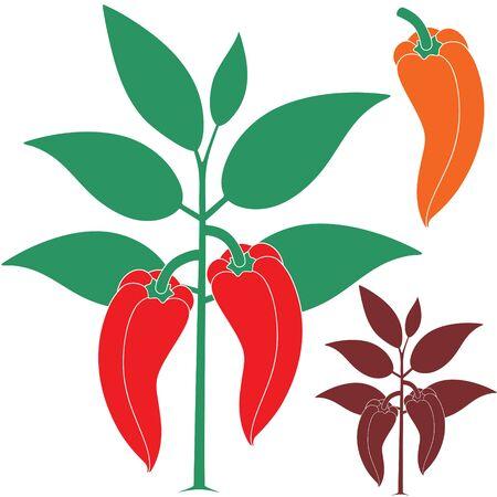 bush pepper: Sweet pepper illustration