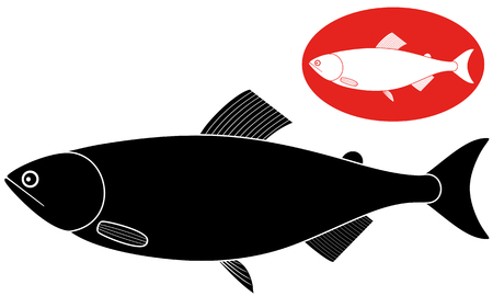 humpback: Humpback salmon illustration