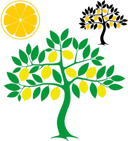 Lemon  tree illustration