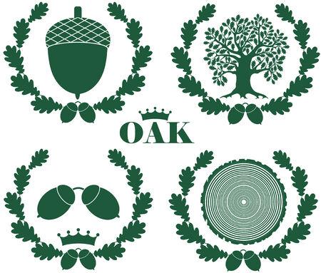 Oak illustration