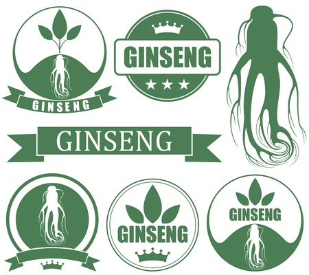 chinese medicine: Ginseng illustration