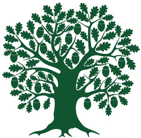 arbol roble: Roble Vectores