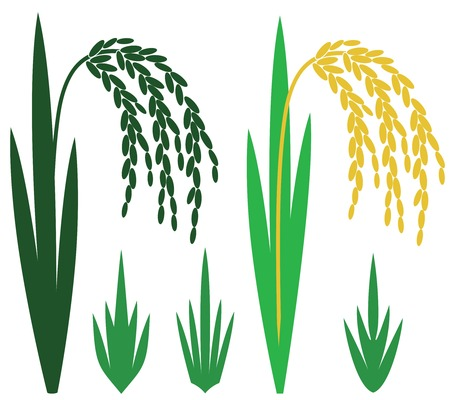 harvesting rice: Rice illustration  Illustration